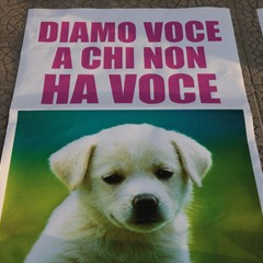 Circo a Trani, protestano gli animalisti