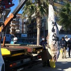 Rimozione della carcassa di delfino dallo Scoglio di Frisio