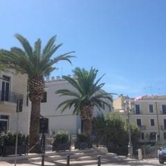 La palma di piazza Quercia