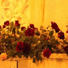 Omaggio floreale all'Immacolata