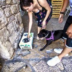 Ciotole di acqua per cani e gatti