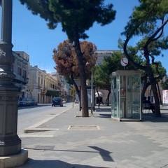Albero rischai di cadere in piazza Gradenico