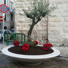 Installati due ulivi all'ingresso della chiesa di Santa chiara