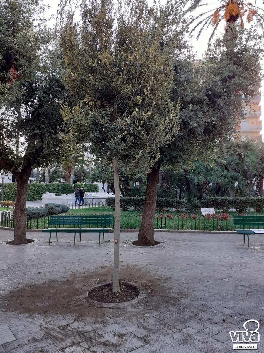 Alberi in piazza della Repubblica