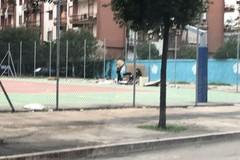 Campetto di via Gisotti