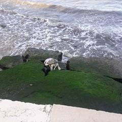 Caretta Caretta spiaggiata