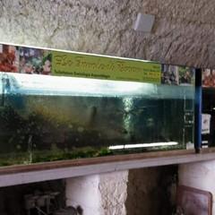 Acquario villa comunale