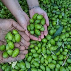 Aziende Agricole Di Martino