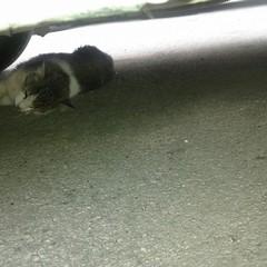 Gatta muore per mancato soccorso