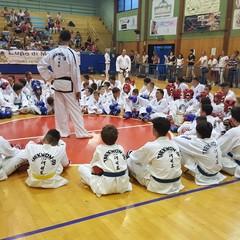 Taekwondo, esami di cintura