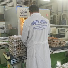"""Azienda avicola """"Colangelo"""""""