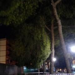 Ramo pericolante nella pinetina di via Andria