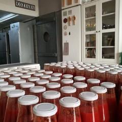 La salsa pugliese, alunni di Trani e Legambiente