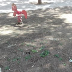 Deiezioni canine nella pinetina di via Andria