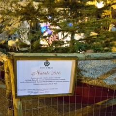 Natale 2016, i Presepi di Trani