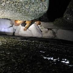 Cane incastrato tra gli scogli, intervento dei Vigili del Fuoco