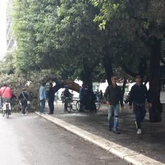 Albero si spezza in due in Piazza della Repubblica