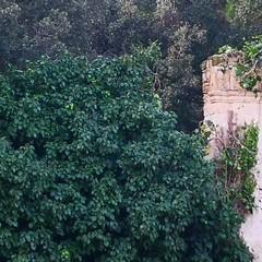 Cadono pezzi dall'ingresso di Villa Telesio: cedimento o atto vandalico?