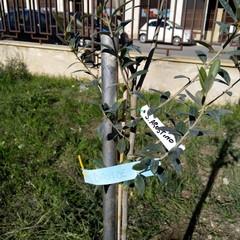 Nuovi alberi