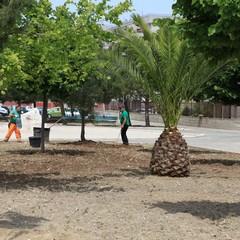 Nuovi alberi in piazza Madre Teresa di Calcutta