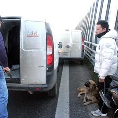 Un cane ferito sulla statale 16 bis