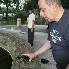 Le tartarughe tornano nella villa di Trani
