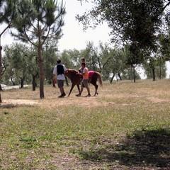 Trani, parco Santa Geffa