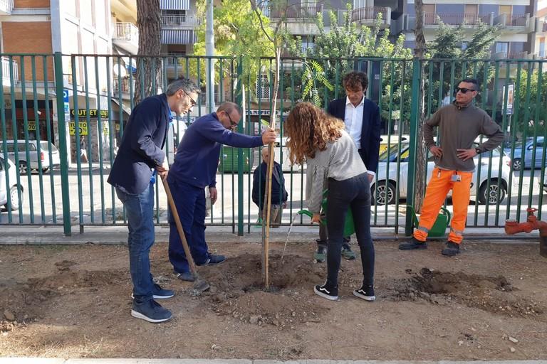 Piantumazione nuovi alberi alla Baldassarre