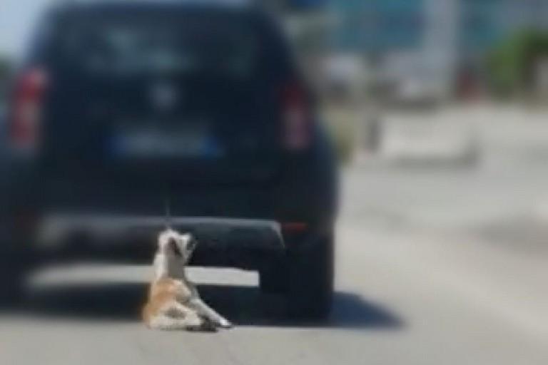 Cane trainato sulla provinciale Trani-Barletta
