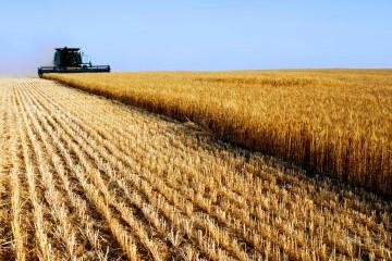 Agricoltura - Grano