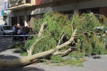 Albero abbattuto dal vento in via Cappuccini
