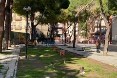Pinetina di via Andria, Legambiente Trani: «All'abbattimento segua la collocazione di nuovi alberi idonei al luogo»