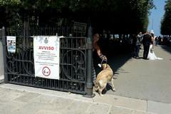 In Villa possono rientrare i cani: il Tar annulla l'ordinanza del sindaco