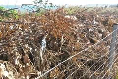 Zona Mongelli, scoperta discarica di residui di potatura