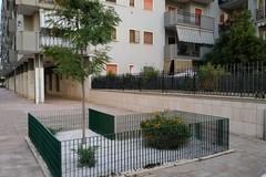 Quartiere Pozzopiano, i residenti adottano due aiuole: piantumati un albero e quattro piante