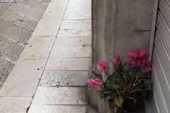 Vasi rotti e piante sradicate, in via Mario Pagano è caccia ai vandali