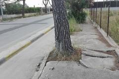 Via Martiri di Palermo, in zona Sud l'incuria regna sovrana