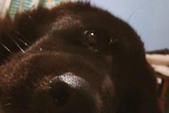 Solidarietà a quattro zampe: la tranese Arianna lancia una raccolta fondi per salvare il suo cane
