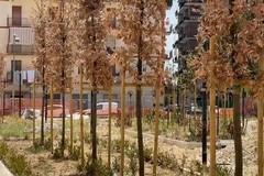 Giardino Telesio e Pinetina di Via Andria: una storia di foglie secche tra soldi non spesi o spesi male