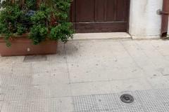 Topo morto in via San Gervasio, Amiu: «Segnalazione risolta nell'arco di 4 ore»
