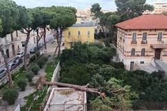 Forti raffiche di vento: cade un albero in corso Imbriani