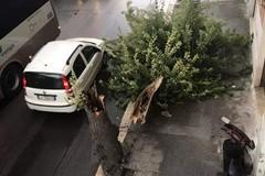 Maltempo in città, cade un albero in corso Imbriani