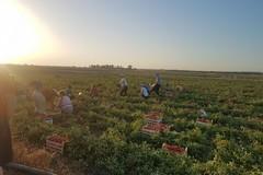 Sistemi di gestione per la sicurezza dei prodotti alimentari: attività informative per le aziende agricole pugliesi 