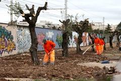 Gli alberi di ulivo su via Falcone ci costano altri 7000 euro
