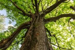 Nuovi alberi su via Bovio: prenderanno il posto di quelli secchi e a rischio caduta