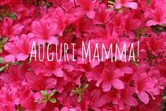 Oggi si celebra la Festa della mamma, a Trani come nel resto del mondo
