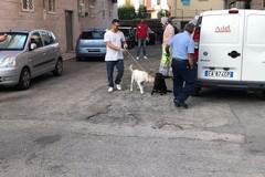 Trani, maltrattamenti in famiglia e su animali: arrestata una 46enne