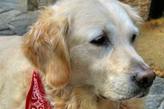 Cani in villa, Orciuolo: «Ennesimo sfregio a uno dei gioielli della città»