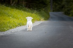 Al via la campagna di sensibilizzazione contro l'abbandono degli animali promossa dal Comune di Trani