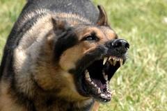 Tre randagi feriscono e uccidono altri cani